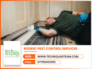 Rodent Pest Control Services 300x225